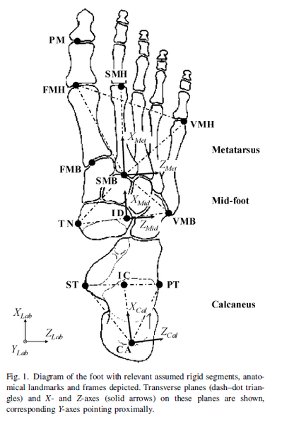 File:Leardini Foot.png