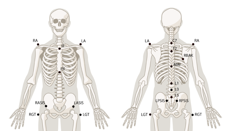 File:SkeletonTrunk.png